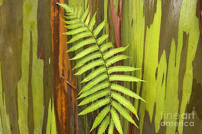 Rainbow Eucalyptus And Fern Poster by Ron Dahlquist - Printscapes