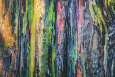 Poster featuring the photograph Rainbow Forest by Ryan Manuel
