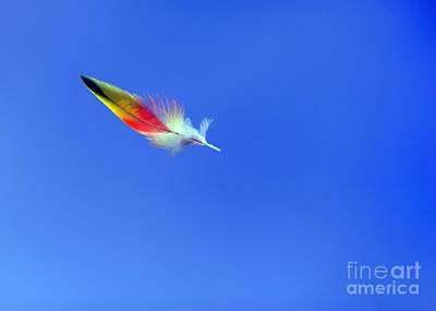 Rainbow Lorikeet Feather Poster by Bill  Robinson