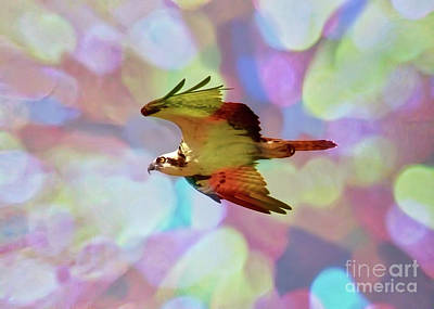 Rainbow Osprey Poster
