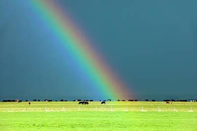 Rainbow Pasture Poster