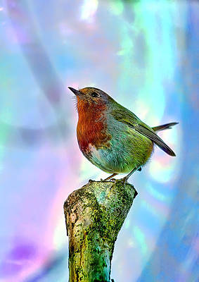 Poster featuring the photograph Rainbow Robin by Gouzel -