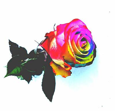 Rainbow Rose 2 Poster