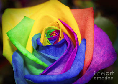Rainbow Rose In Paint Poster by Janice Rae Pariza