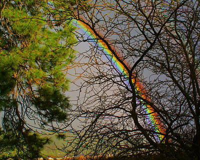 Poster featuring the photograph Rainbow Tree by Ben Upham III