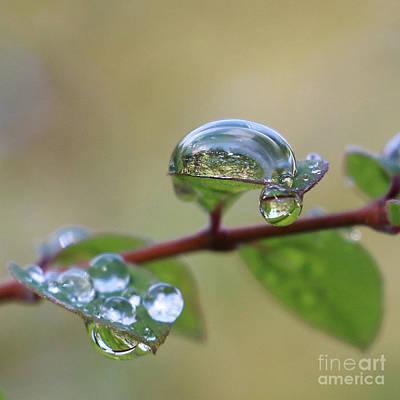 Raindrop Reflections Poster