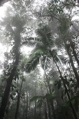 Rainforest Poster by AR Annahita