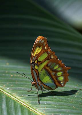 Rainforest Butterfly Poster