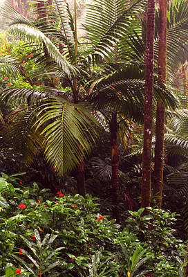 Rainforest Palm Trees  Poster