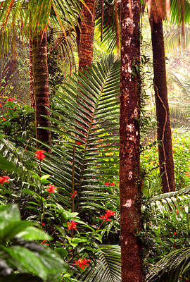 Rainforest Palms And Hibiscus Poster by Thomas R Fletcher