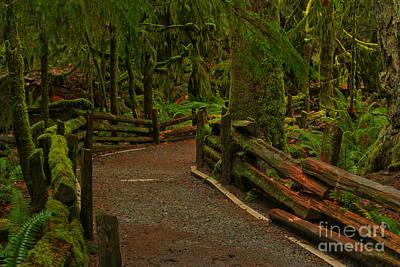 Rainforest Solitude Poster by Adam Jewell
