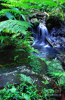 Rainforest Waterfall Poster