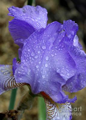 Rainy Day Iris Poster by Carol Groenen