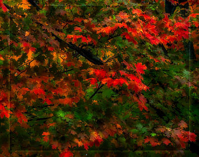Rainy Fall Leaves Poster by Steven Maxx