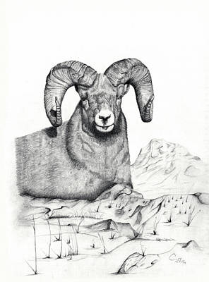 Poster featuring the drawing Ram by Mayhem Mediums