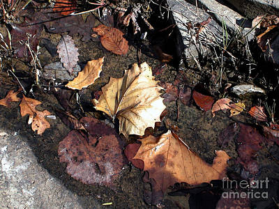Random Leaves At Richland Ceek Poster by Steve Grisham