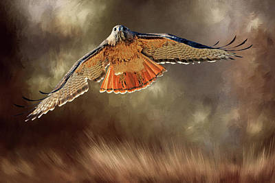 Raptor Poster by Donna Kennedy