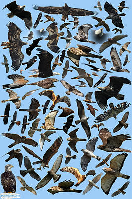 Raptor Roundup Poster by ML Lombard
