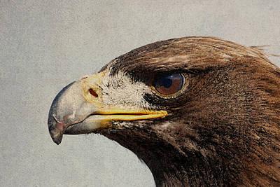 Raptor Wild Bird Of Prey Portrait Closeup Poster by Design Turnpike