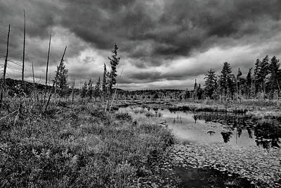 Poster featuring the photograph Raquette Lake Bog by David Patterson