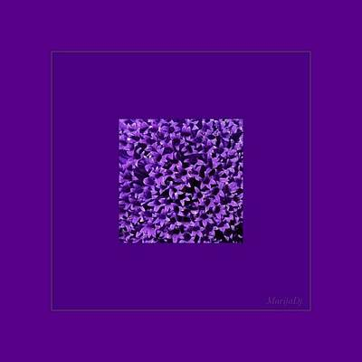 Rare Flower Poster by Marija Djedovic
