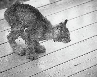 Crouching Kitty Poster