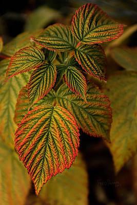 Raspberry Leaves Poster