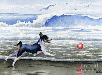 Rat Terrier At The Beach  Poster