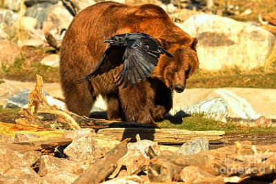 Raven And Kodiak Poster by Adam Jewell