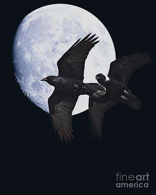 Ravens Of The Night Poster by Wingsdomain Art and Photography