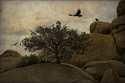 Ravens Searching For Food Poster