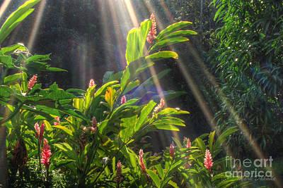 Rays Of Sunlight Poster