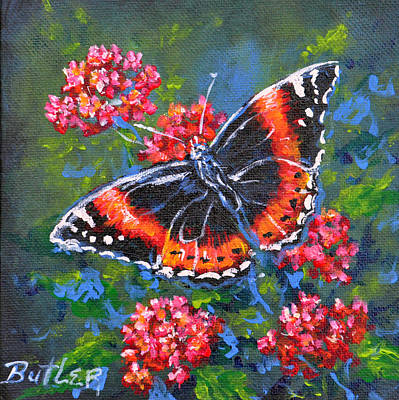 Red Admiral Poster by Gail Butler