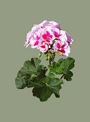 Red And Pink Geranium Poster by Susan Savad