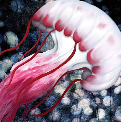Red And White Jellyfish  Poster