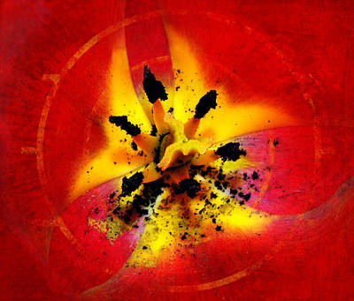 Red And Yellow Flower Poster by Judi Saunders