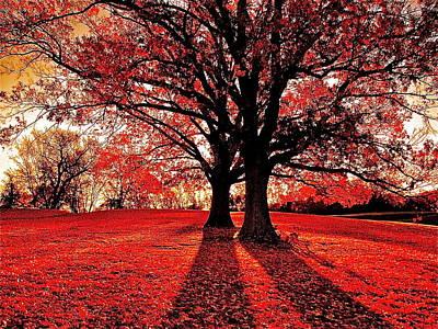 Red Autumn Poster by E Robert Dee