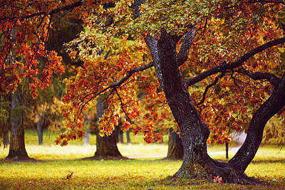 Red Autumn Tree Poster by Sandra Rugina