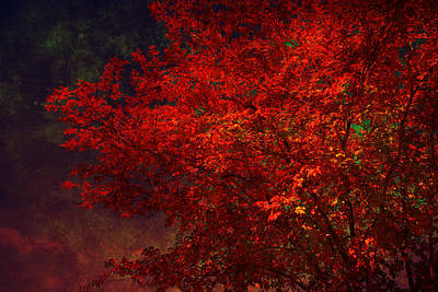 Red Autumn Tree Poster