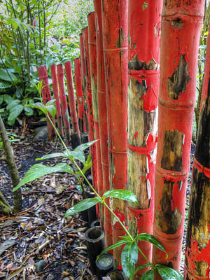 Red Bamboo Poster by Dolly Sanchez