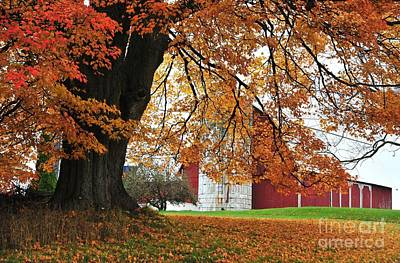 Red Barn In Autumn Poster by Terri Gostola