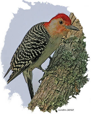 Red-bellied Woodpecker Poster by Larry Linton