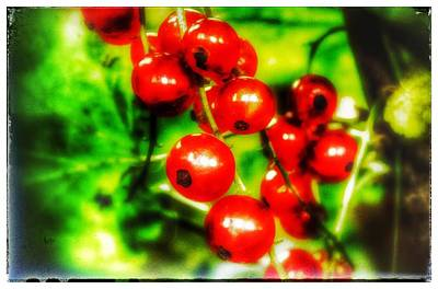 Poster featuring the photograph Red Berries by Isabella F Abbie Shores FRSA
