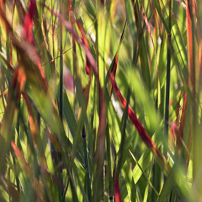 Red Blades Among The Green Poster