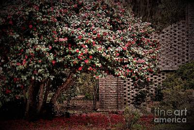 Red Blossom Tree Poster by Paulette Thomas