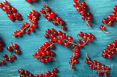 Red Currant Poster by Jelena Jovanovic