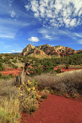 Red Dirt And Cactus In Sedona Poster by James Eddy