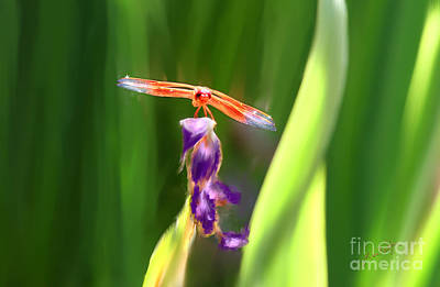 Red Dragonfly On Purple Flower Poster