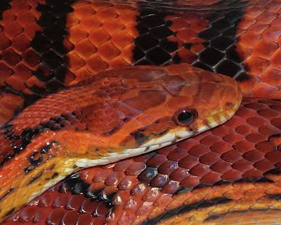 Red Eyed Snake Poster