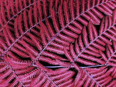 Red Fern Poster